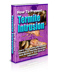 how-to-prevent-termites