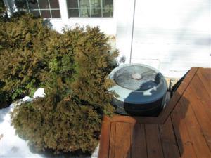 AC unit with vegetation too close