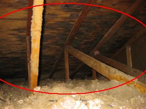 Attic Sheathing Mold