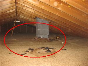 Attic And Roof Structure Inspection Your Home Inspection
