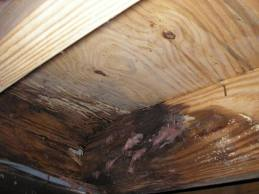 rotted joist