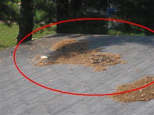 roof_debris