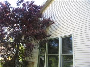 exterior trees